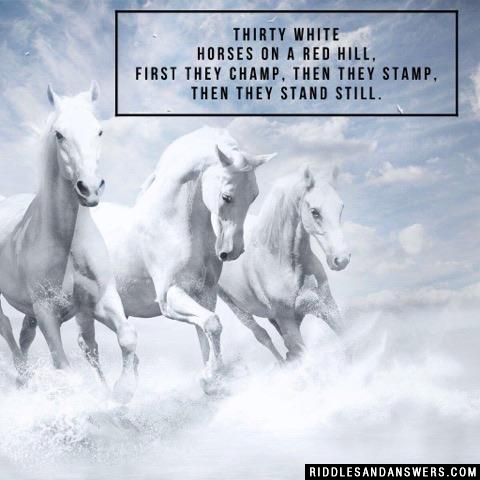Thirty white horses on a red hill,