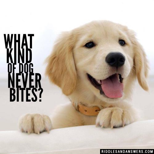 What kind of dog never bites?