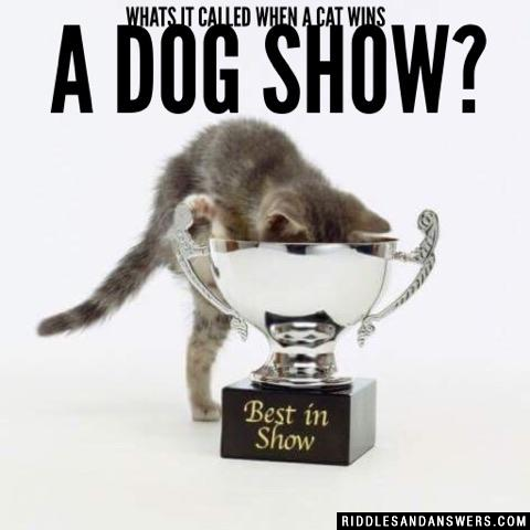 Whats it called when a cat wins a dog show?