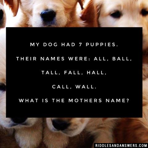 My Dog had 7 Puppies. Their names were: All, Ball, Tall, Fall, Hall, Call, Wall. What is the mothers name?