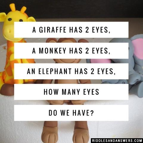 A giraffe has 2 eyes, a monkey has 2 eyes, an elephant has 2 eyes, how many eyes do we have?