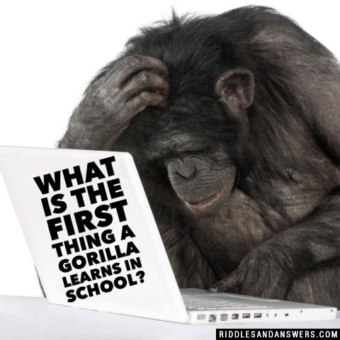 What is the first thing a gorilla learns in school?