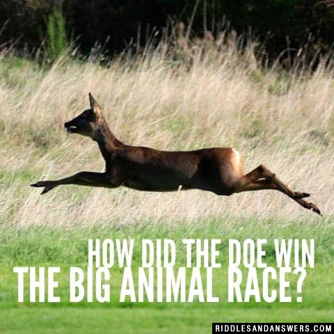 How did the Doe win the big animal race?