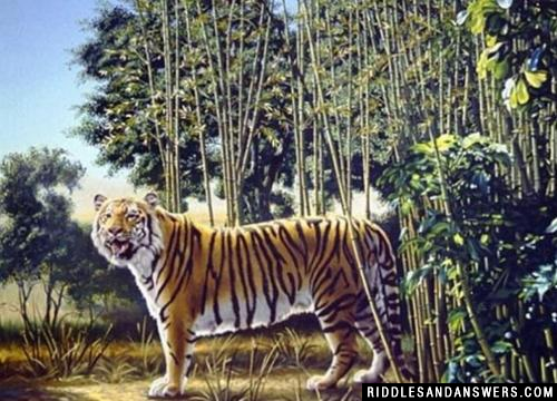 Can you locate the hidden tiger in the image given above?