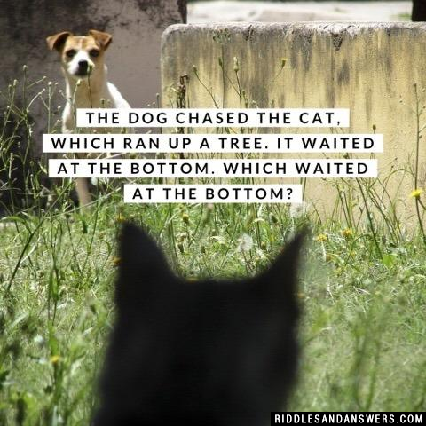 The dog chased the cat, which ran up a tree. It waited at the bottom.