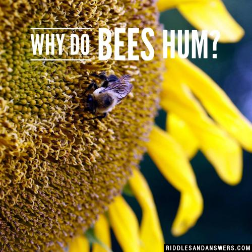 Why do bees hum?