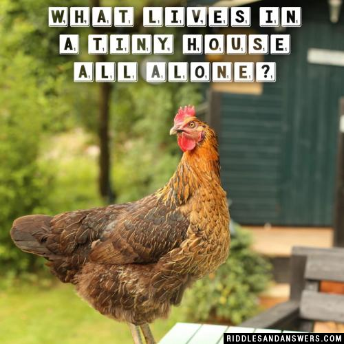 What lives in a tiny house all alone?